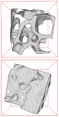 Trabecular bone aligned to its fabric tensor showing preferential orientation of plates and rods