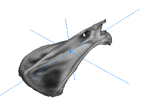Scapula aligned to principal axes
